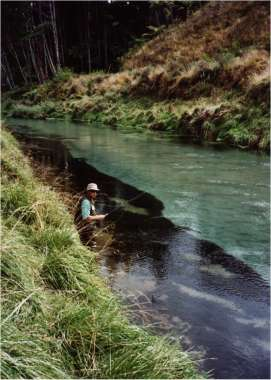 Fly fishing the bay of plenty for Fly fishing bay area
